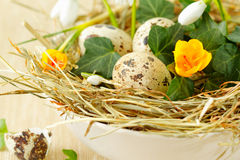 Easter nest with quail eggs Royalty Free Stock Images