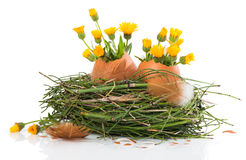 Easter nest with spring flowers Stock Photo