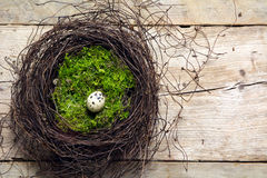 Easter nest of twigs and moss with a lonely quail egg on rustic Stock Photography