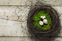 Easter nest of twigs and moss with three quail eggs on rustic wo Royalty Free Stock Photography
