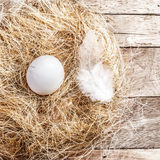 Easter nest with White Egg and feather on wooden background with Stock Photos