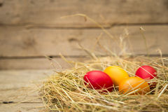 Easter nest with yellow and red eggs Royalty Free Stock Image