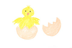 Easter new-born chick painted Stock Images
