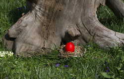 Easter. Old tree and nest with red egg in honor of Easter Royalty Free Stock Photo