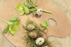 Easter palette with quail eggs and hellebore close up. Happy Easter decoration stock photo