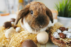 Easter pet Royalty Free Stock Images