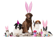 Easter pets. Group of pets isolated on white royalty free stock photos