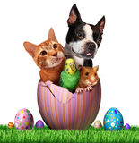 Easter Pets. And pet spring holiday animals group for veterinary medicine and pet store holidays as a cute dog hamster bird and a cat inside an open decorated stock illustration