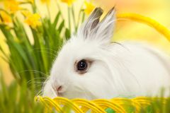Easter photo. Funny little rabbit in basket. Greeting card with bunny Stock Photos