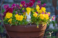 Easter in a potted plant royalty free stock photos