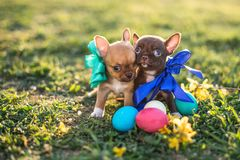 Free Easter Puppy Royalty Free Stock Photo - 144625075