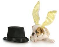 Easter puppy Stock Photos