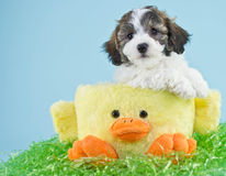 Easter Puppy Stock Image