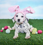 Easter Puppy Stock Images