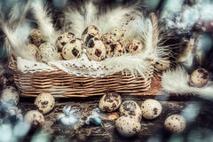 Easter Quail eggs in Basket with hyacinths flowers on dark wooden b stock image