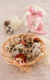 Easter quail eggs with bunny Stock Images