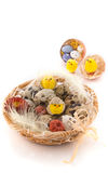 Easter quail eggs with  chicken Stock Images