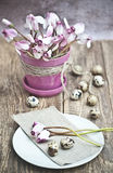 Easter quail eggs with cyclamen in a pot royalty free stock image
