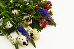 Easter quail eggs with flower on a white background. Quail eggs with flower  on a white background Stock Images