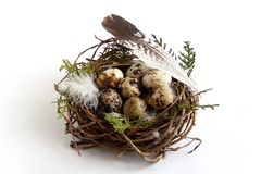Easter quail eggs in nest with feather birds stock images