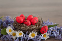 Easter quail eggs Stock Photos