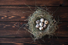 Easter quail eggs in the nest on rustic wooden. Easter eggs in the nest on rustic wooden background Royalty Free Stock Photography