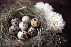 Easter quail eggs in the nest on rustic wooden. Easter eggs in the nest on rustic wooden background Stock Photo