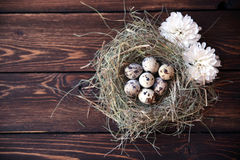 Easter quail eggs in the nest on rustic wooden. Easter eggs in the nest on rustic wooden background Royalty Free Stock Photos