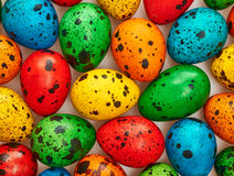 Easter quail Eggs painted beautiful multicolored background Royalty Free Stock Photography