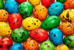 Easter quail Eggs painted beautiful multicolored background Stock Photos