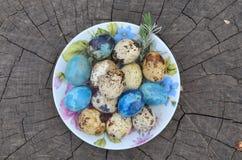Easter  quail eggs Royalty Free Stock Photo