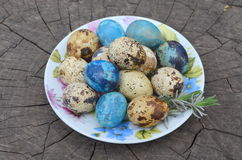 Easter  quail eggs Royalty Free Stock Image