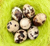 Easter quail eggs are on sisal fibre Royalty Free Stock Image