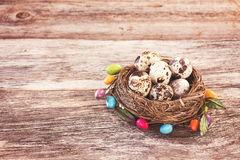 Easter quail eggs in small nest on wooden background. Soft focus Stock Image