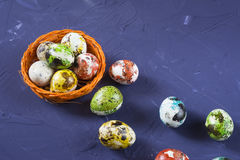 Easter quail eggs. In small orange basket on blue background Royalty Free Stock Image