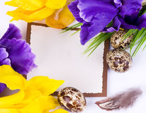 Easter quail eggs and spring flowers Stock Image