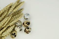 Easter quail eggs on a white background. Quail eggs with wheat on a white background Royalty Free Stock Photo