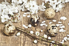 Easter quail eggs with white small flowers Royalty Free Stock Photography