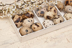 Easter. Quail eggs, wooden box and flowers Stock Photography