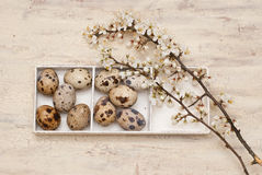 Easter. Quail eggs, wooden box and flowers Royalty Free Stock Images