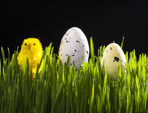 Easter quail eggs and yellow artificial chick Royalty Free Stock Photo