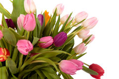 easter rabatowi tulipany zdjęcie royalty free