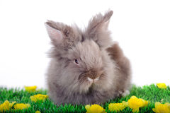 Easter Rabbit. At white background