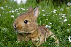 Free Easter Rabbit Stock Photography - 2391792