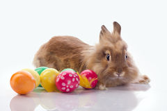 Easter rabbit. Cute bunny with easter eggs  on white Stock Photo