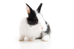 Easter rabbit stock photo