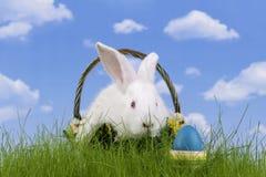 Easter-rabbit Royalty Free Stock Photo