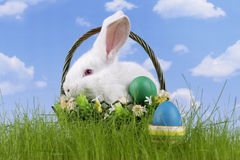 Easter-rabbit royalty free stock image