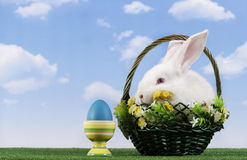 Easter-rabbit Stock Photos