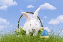 Easter-rabbit Royalty Free Stock Photo